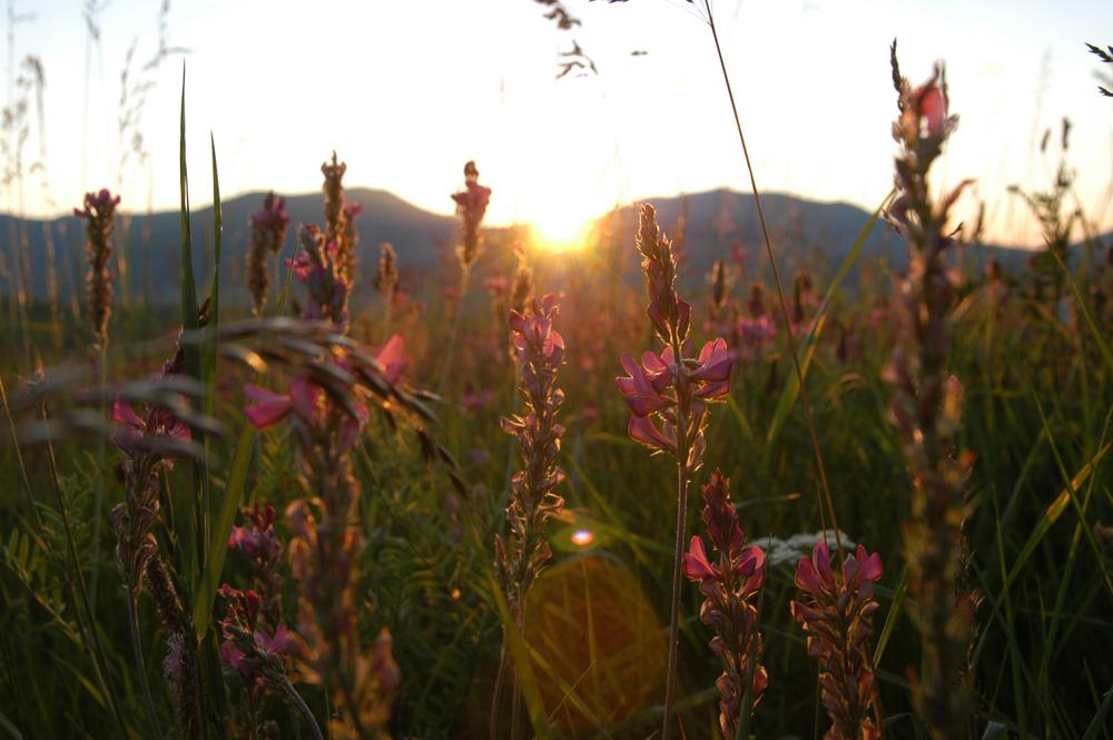 La Fioritura di Castelluccio di Norcia - die große Blüte im Juni