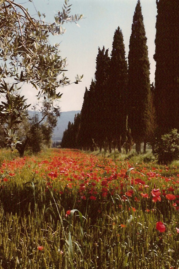 Zypressenallee zum Schloss Pischiello der Marchesa die Sorbello